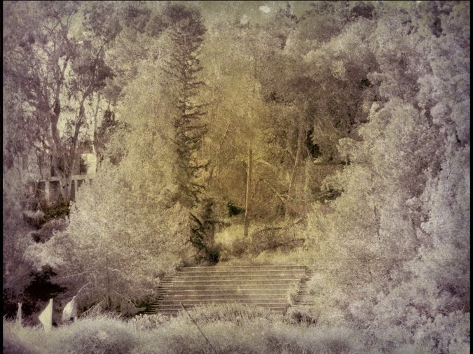 A grove of trees Sepia / Michal Alma