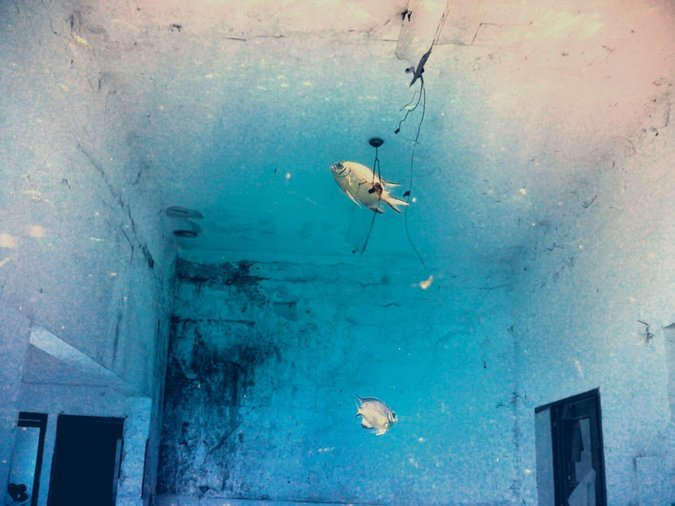 Fish in a room / Michal Alma
