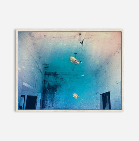 Fish in a room /