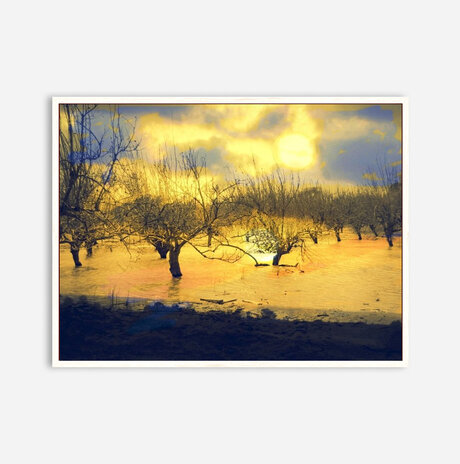 Sunset and trees /