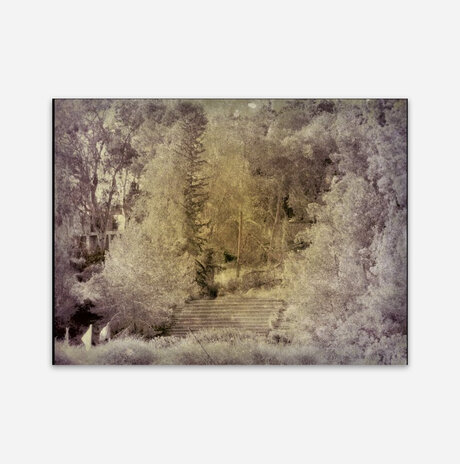 A grove of trees Sepia /