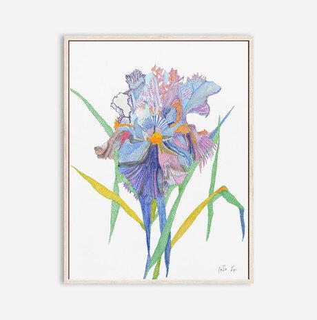 Corona Iris / Yael Balaban