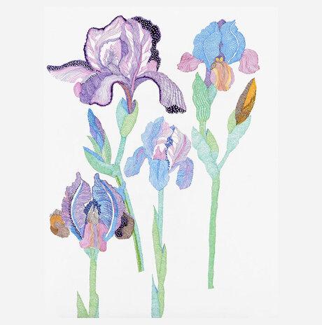 Iris follows De Bray / Yael Balaban