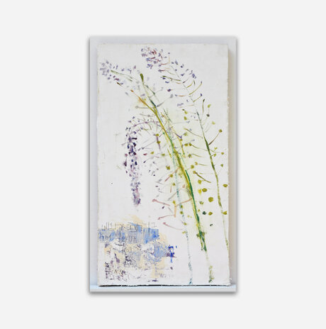 Scilla Hyacinthoides / Nurit Gur Lavy