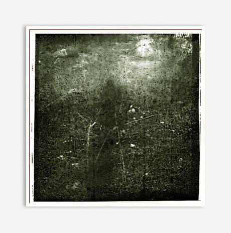 יער 22/1151 / שי זכאי