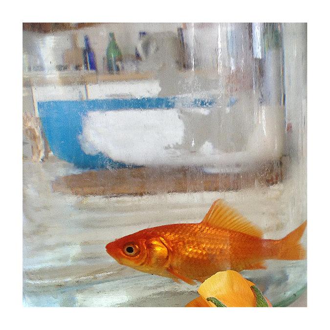 דג הזהב / נינו הרמן