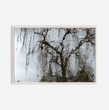 Weeping willow tree /