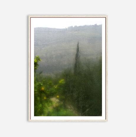 cypress /